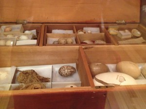 Master Henry Gilbert's bird egg collection